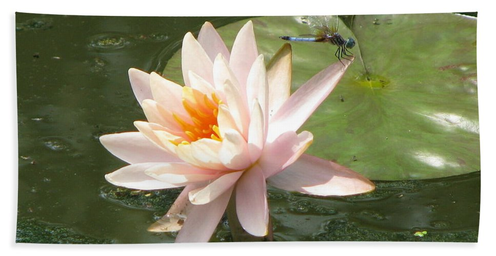 Dragon Fly Hand Towel featuring the photograph Dragonfly Landing by Amanda Barcon