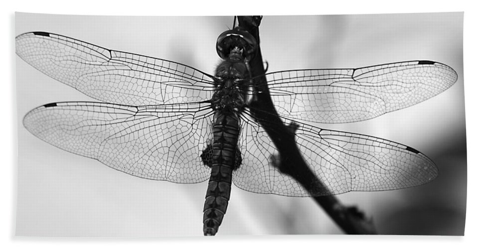 Dragonfly Hand Towel featuring the photograph Dragonfly Mosaic by Joe Schofield