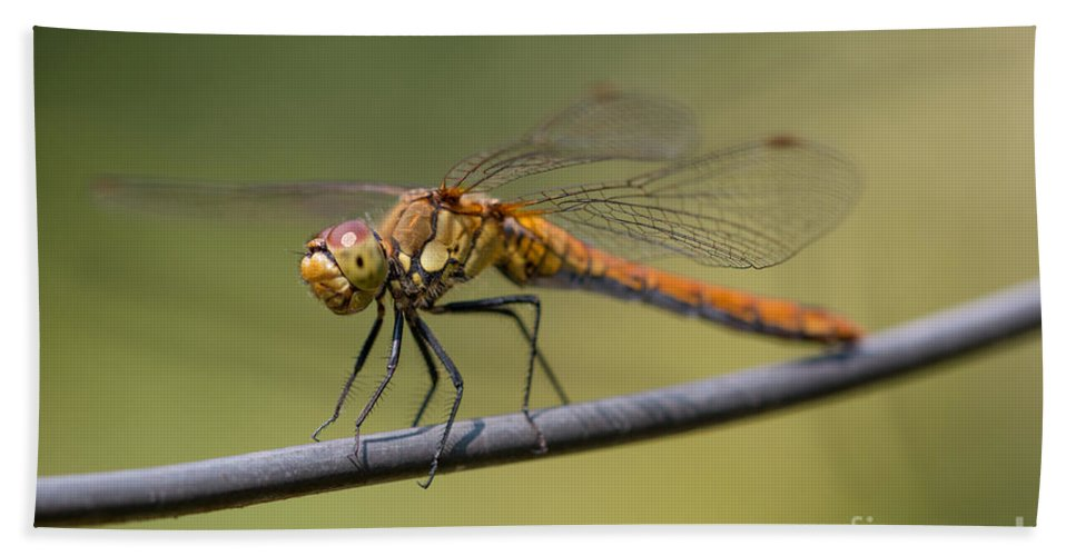 Animal Bath Sheet featuring the photograph Dragonfly On A Wire by Brothers Beerens