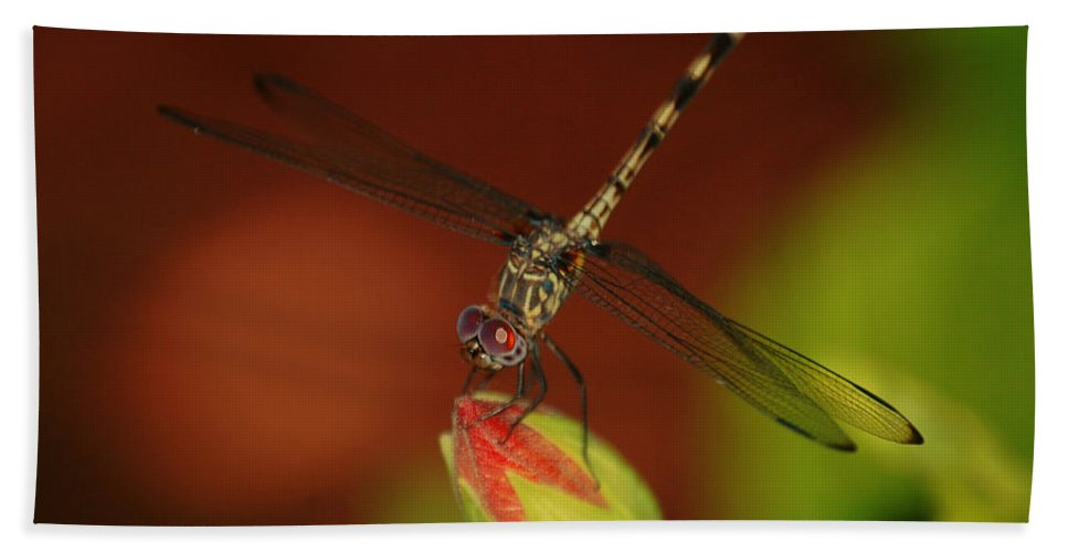 Dragonfly Bath Sheet featuring the photograph Dragonfly On Hibiscus by Leticia Latocki