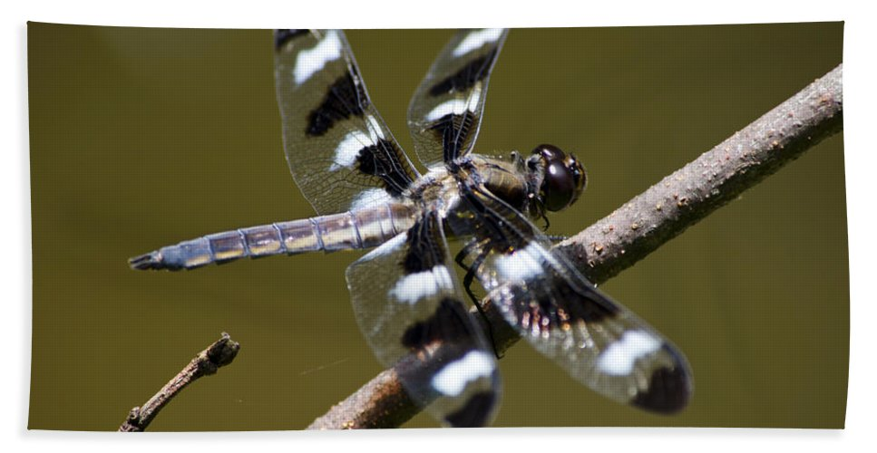 Dragonflies Hand Towel featuring the photograph Dragonfly Twelve Spot Skimmer by Christina Rollo