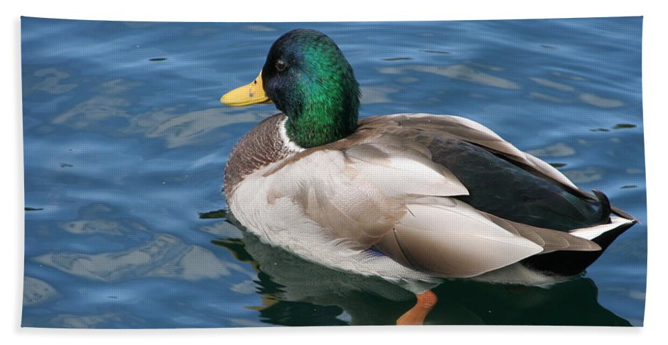 Mallard Bath Sheet featuring the photograph Green Headed Mallard Duck by Valerie Collins