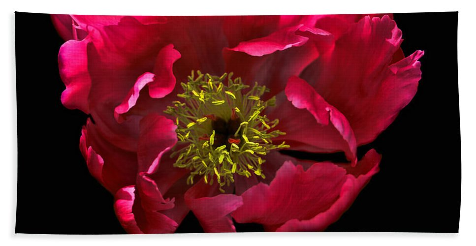 Peony Hand Towel featuring the photograph Dramatic Red Peony Flower by Jennie Marie Schell