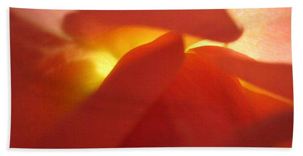 Floral Hand Towel featuring the photograph Glowing Orange Rose 2 by Tara Shalton