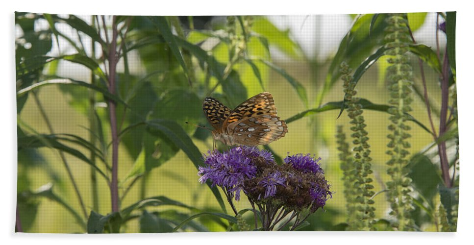 Great Spangled Fritillary Bath Sheet featuring the photograph Draped In Spangled Glory by Jayne Gohr