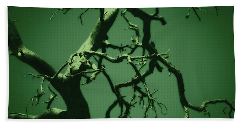 Tree Bath Towel featuring the photograph Dreaming Green by Paulina Roybal
