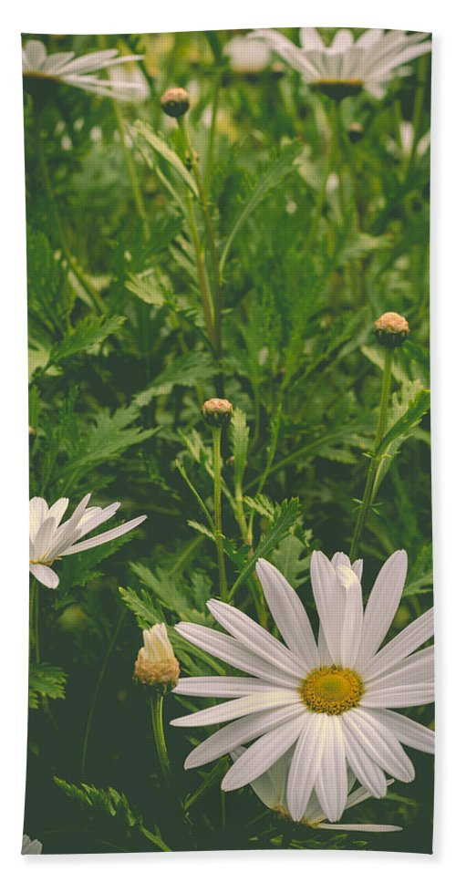 Daisy Hand Towel featuring the photograph Dreaming Of Daisies by Marco Oliveira