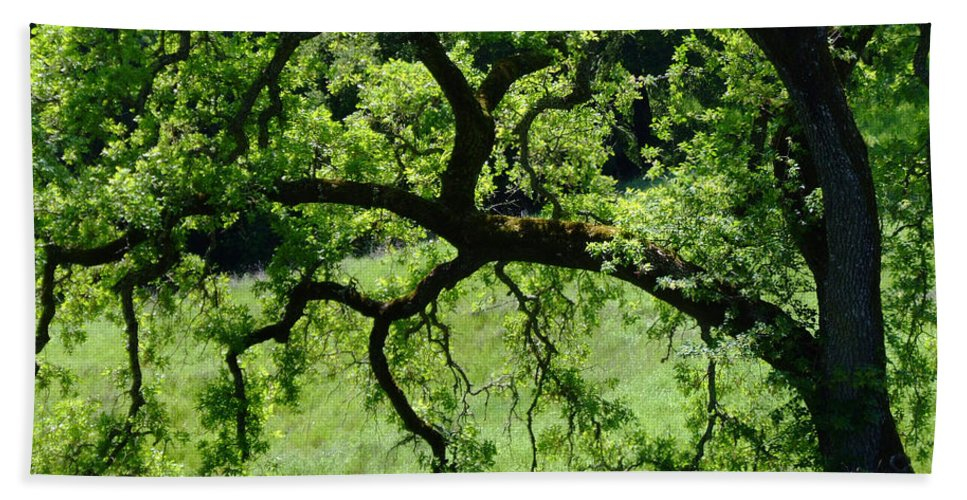 Oak Hand Towel featuring the photograph Dreaming Under The Old Oak by Donna Blackhall