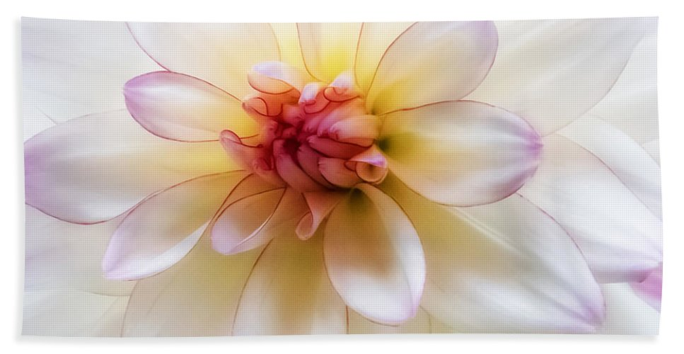 Dahlia Hand Towel featuring the photograph Dreamy Dahlia by Mary Jo Allen