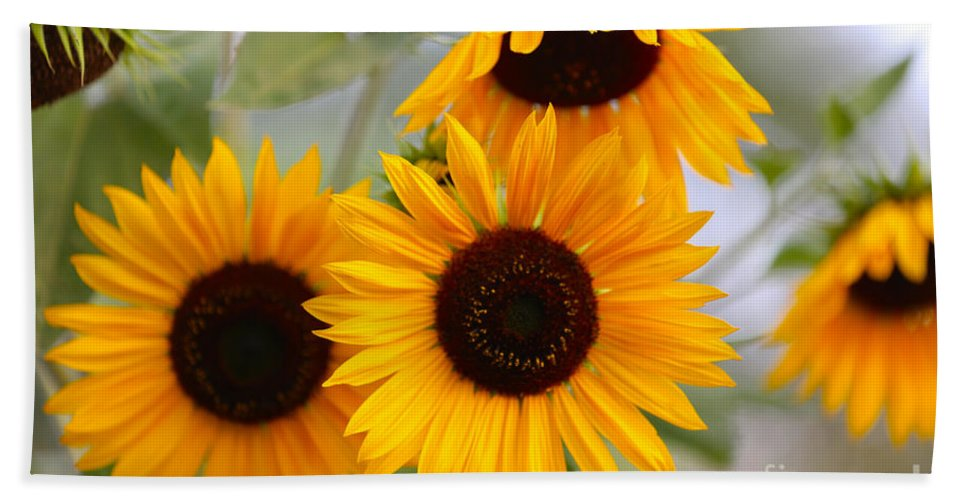 Sunflower Hand Towel featuring the photograph Dreamy Sunflower Day by Carol Groenen
