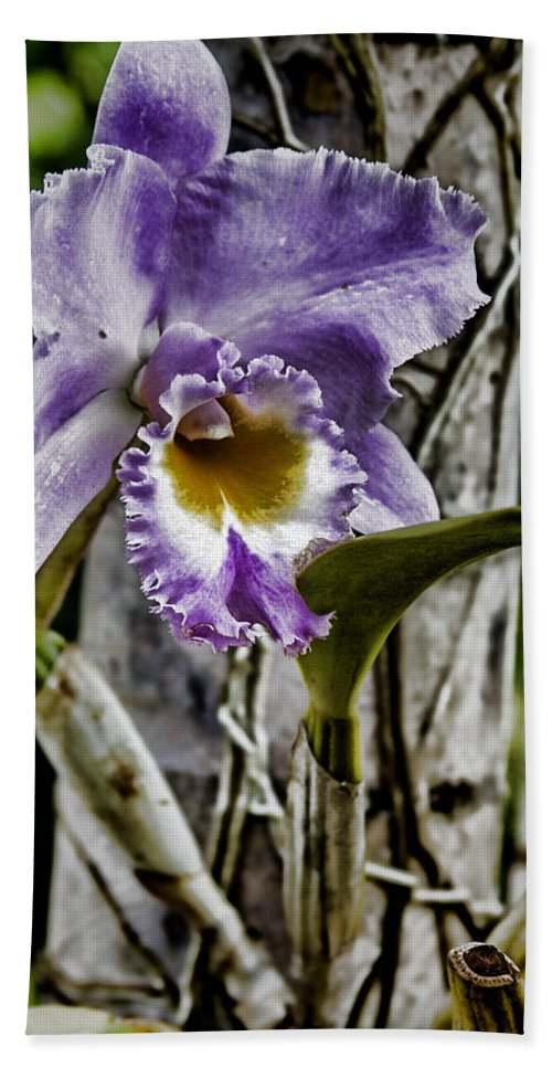 Orchid Hand Towel featuring the photograph Dressed In Purple by Douglas Barnard