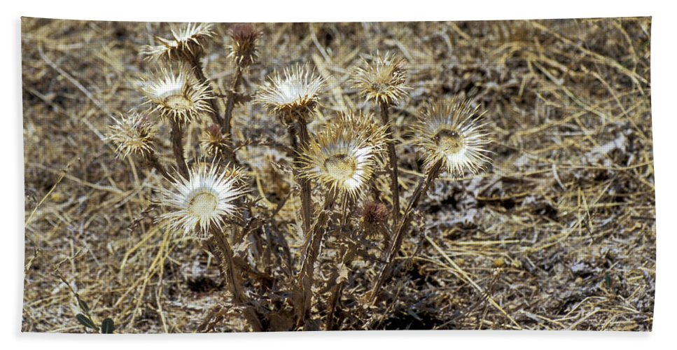 Aphrodisiac Bath Sheet featuring the photograph Dried Flowers by Bob Phillips