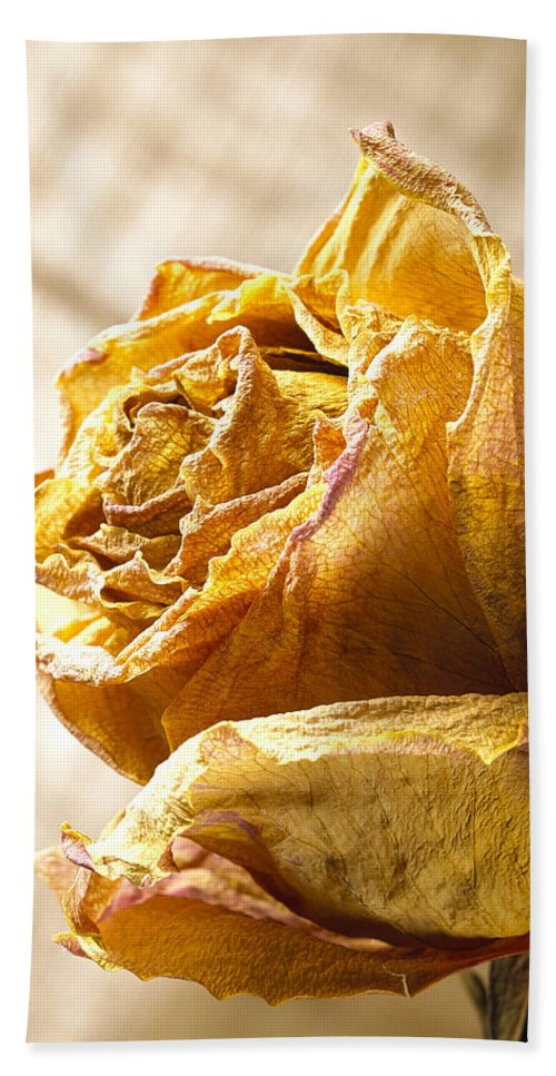 Flower Bath Sheet featuring the photograph Dried Yellow Rose by Daniel Troy