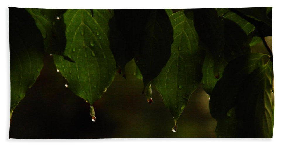 Leaves Hand Towel featuring the photograph Dripping From The Green by Jeff Swan