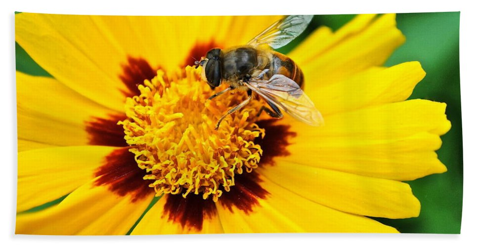 Queen Bath Sheet featuring the photograph Drone Bee by Frozen in Time Fine Art Photography