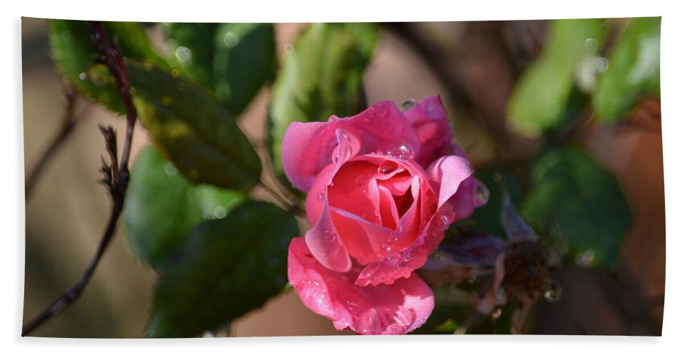 Rose Hand Towel featuring the photograph Droplets by Linda Kerkau