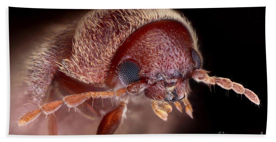Drugstore Beetle Bath Towel featuring the photograph Drugstore Beetle by Matthias Lenke