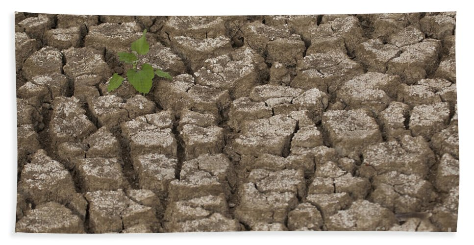 Drought Hand Towel featuring the photograph Dry Cracked Mud by Eyal Bartov