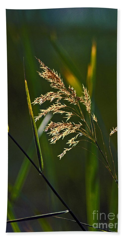 Dry Grass Bath Sheet featuring the photograph Dry Grass by Howard Stapleton