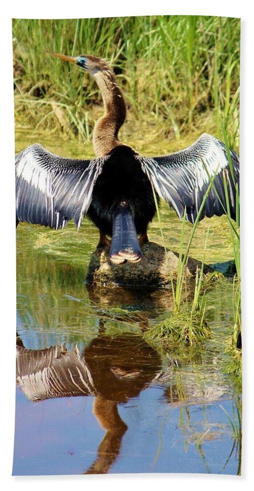 Anhinga Hand Towel featuring the photograph Drying Her Wings by Cynthia Guinn