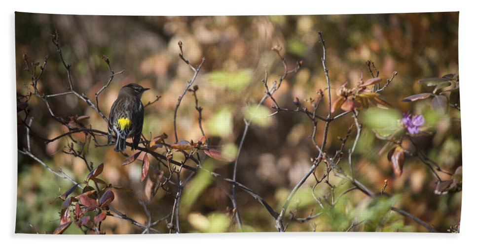 Sparrow Hand Towel featuring the photograph Drying Off In The Sun by Teresa Mucha