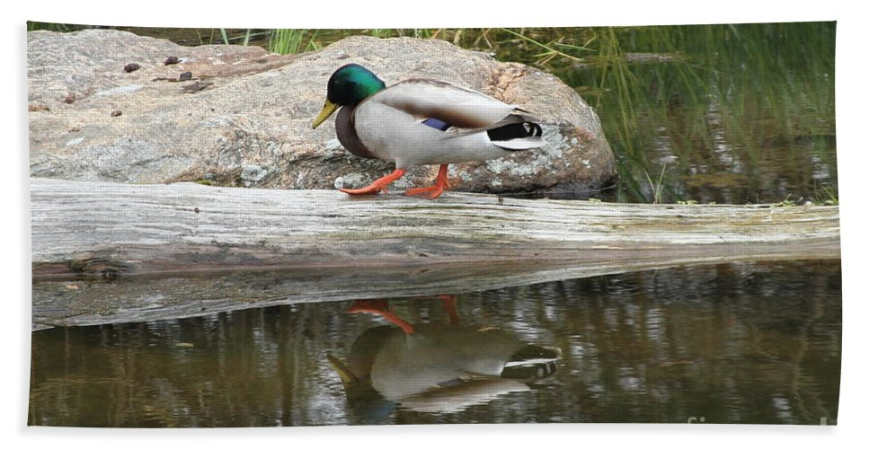 Duck Bath Towel featuring the photograph Duck Duck by Rick Monyahan