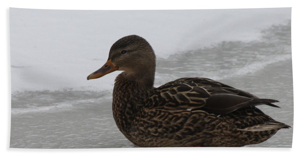 Duck On Ice Bath Sheet featuring the photograph Duck On Ice by John Telfer