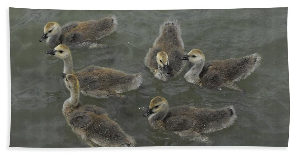 Ducks Hand Towel featuring the photograph Ducklings by Brandi Maher