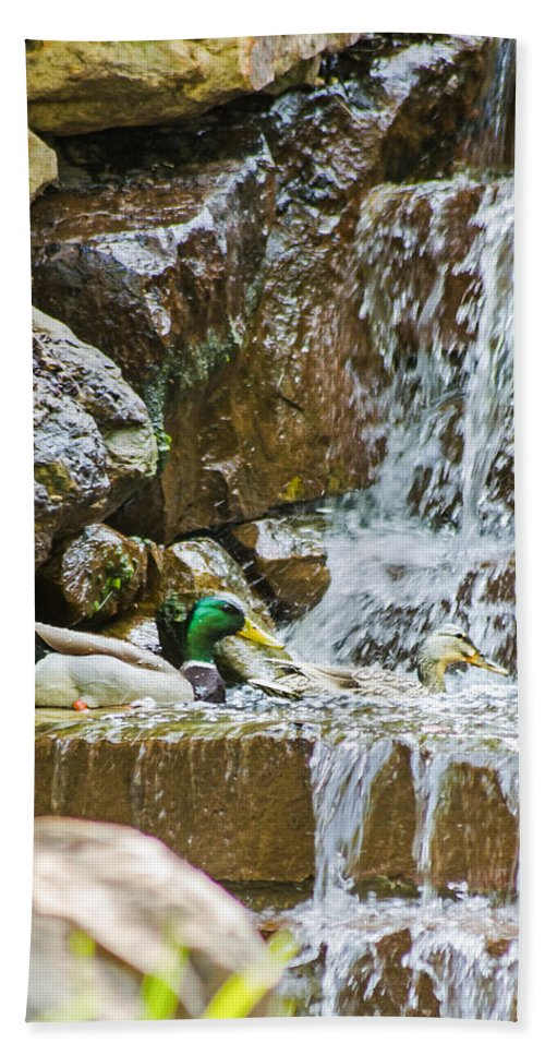 Dallas Hand Towel featuring the photograph Ducks In The Falls by Allen Sheffield