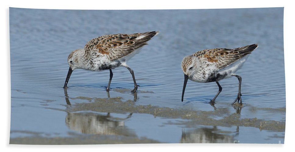 Dunlin Hand Towel featuring the photograph Dunlins by Anthony Mercieca