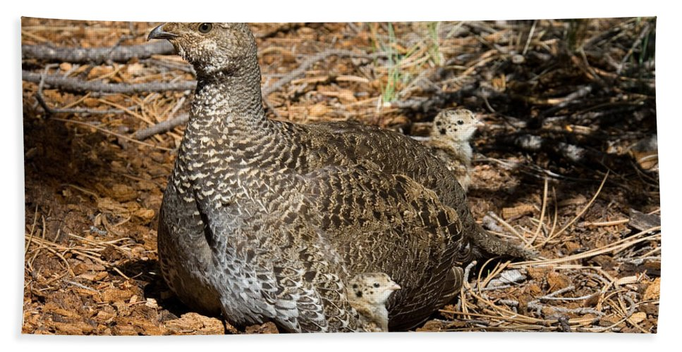 Animal Hand Towel featuring the photograph Dusky Grouse With Chicks by Anthony Mercieca