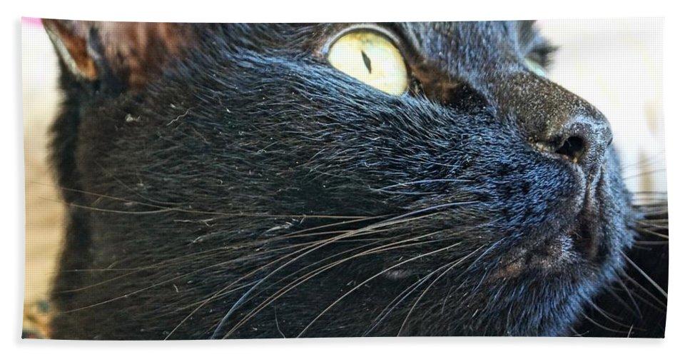 Black Bath Sheet featuring the photograph Dusty Black Cat by Kerri Mortenson
