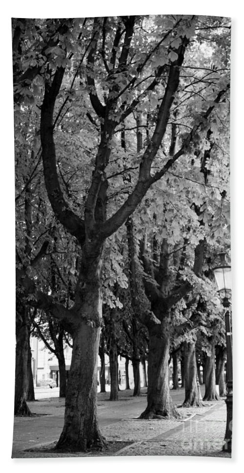 Europe Bath Sheet featuring the photograph Dutch City Trees - Black And White by Carol Groenen
