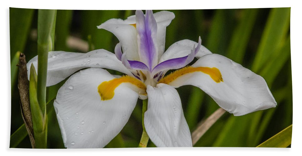 Florida Hand Towel featuring the photograph Dwarf Iris by Jane Luxton