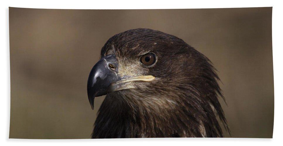 Doug Lloyd Bath Sheet featuring the photograph Eagle Beauty by Doug Lloyd