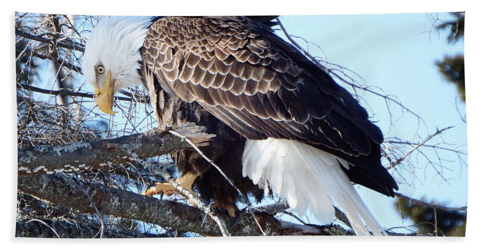 Eagle Hand Towel featuring the photograph Eagle Eye by Alison Gimpel