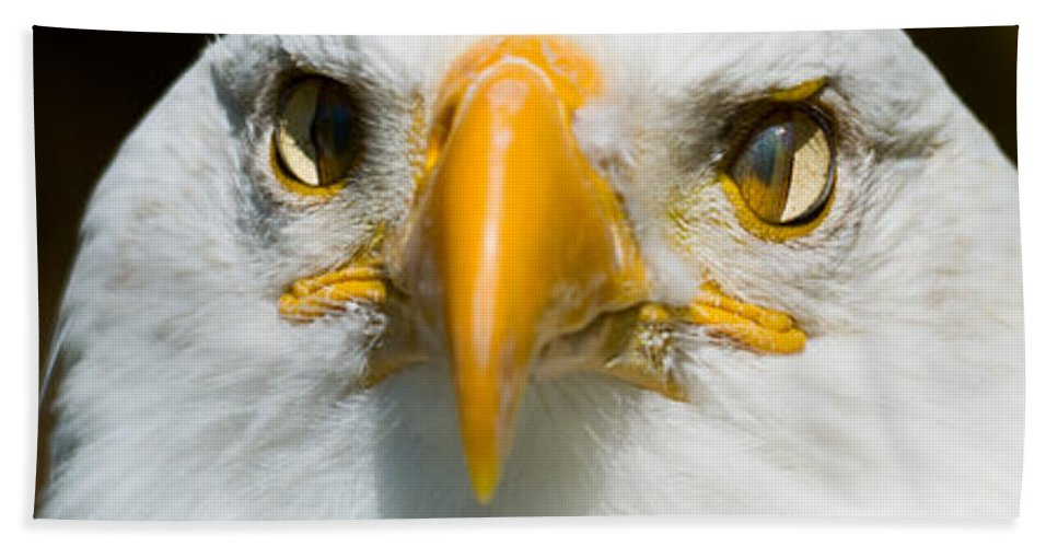 Bald Hand Towel featuring the photograph Eagle Eyes by Les Palenik