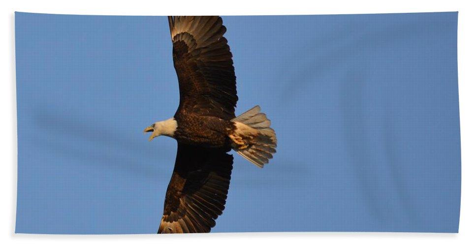 Eagle Bath Sheet featuring the photograph Eagle Flight 4 by Bonfire Photography