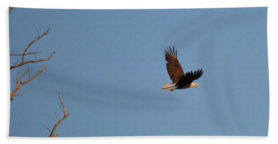 Eagle Bath Sheet featuring the photograph Eagle Flight by Bonfire Photography
