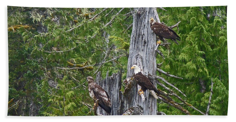 Eagles Bath Sheet featuring the photograph Eagle Gang by Heather Coen