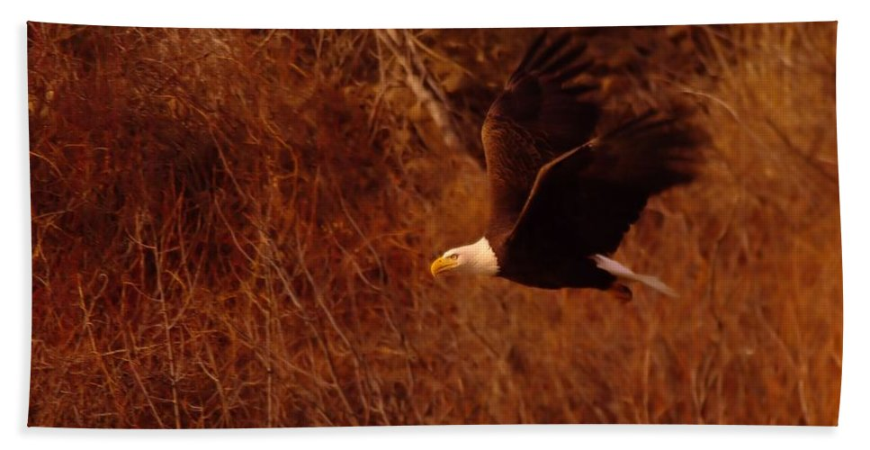 Eagles Hand Towel featuring the photograph Eagle In Flight by Jeff Swan