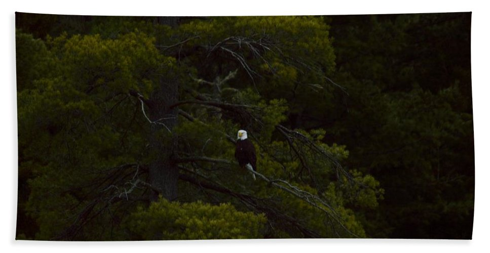 Bald Eagle Hand Towel featuring the photograph Eagle In The Green by Thomas Phillips