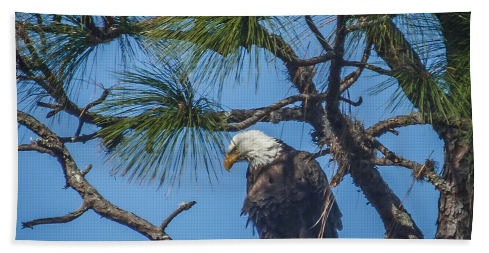 Florida Bath Sheet featuring the photograph Eagle by Jane Luxton