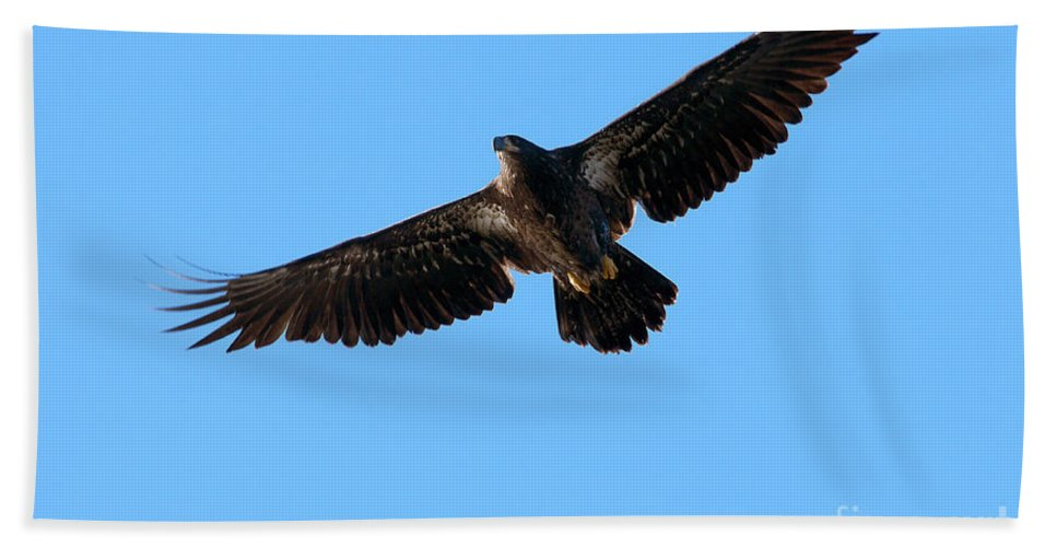 Bald Eagle Hand Towel featuring the photograph Eagle Wings by Sharon Talson
