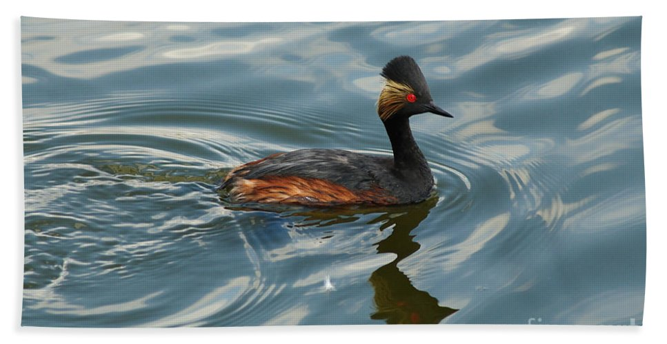 Eared Grebe Bath Sheet featuring the photograph Eared Grebe by Vivian Christopher