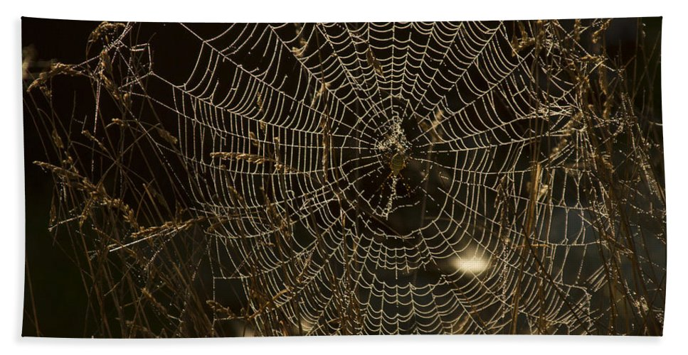 Spider Web Bath Sheet featuring the photograph Early Riser by David Yocum