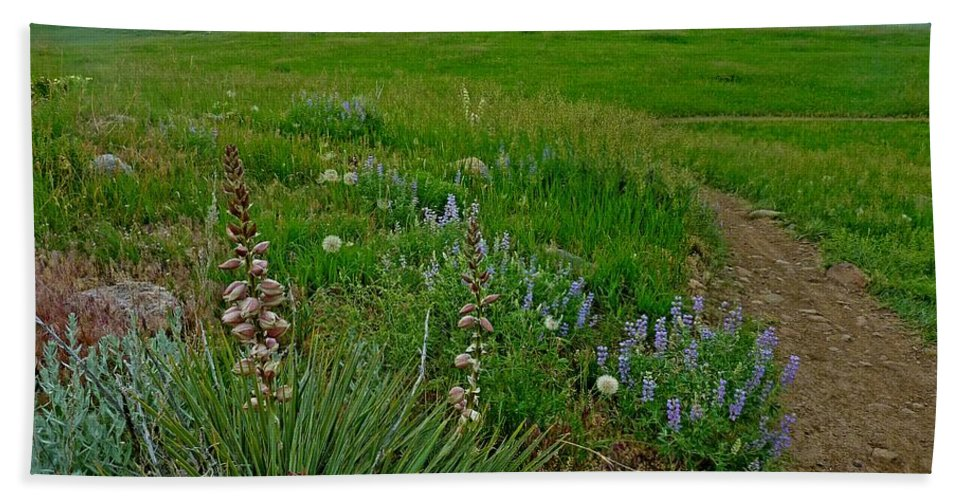 Nature Photography Bath Sheet featuring the photograph Early Summer Walk by George Tuffy