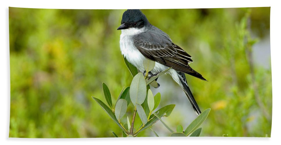 Animal Hand Towel featuring the photograph Eastern Kingbird by Anthony Mercieca