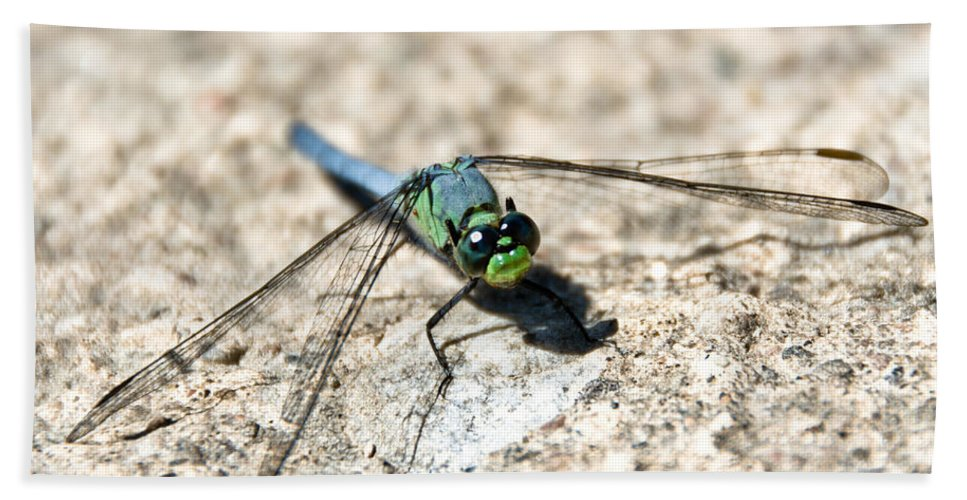Dragonfly Hand Towel featuring the photograph Eastern Pondhawk by Cheryl Baxter