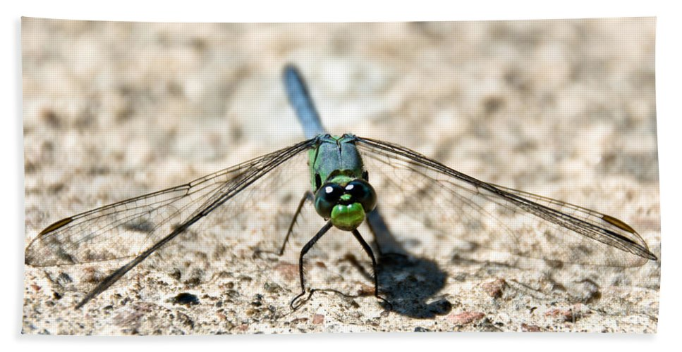 Dragonfly Hand Towel featuring the photograph Eastern Pondhawk Front by Cheryl Baxter